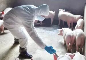 我国每年需要兽医人才近万人,兽医人才严