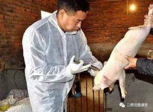 夏季养猪场如何科学、正确使用和保存疫苗