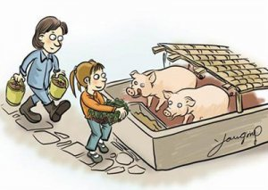自从用上水料后,肥猪再也没患过高热病了