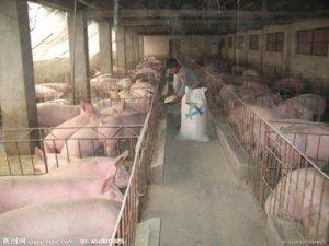 存栏超量,台山某种猪场被依法强制执行