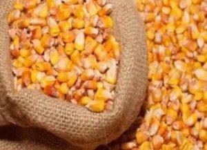 玉米豆粕等饲料原料质量简易识别法