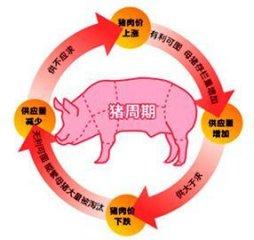 猪周期是生猪产业的不稳定和不成熟的体现
