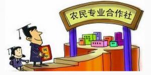"""南通海门""""养猪状元"""":合作社+党支部走出富民路"""