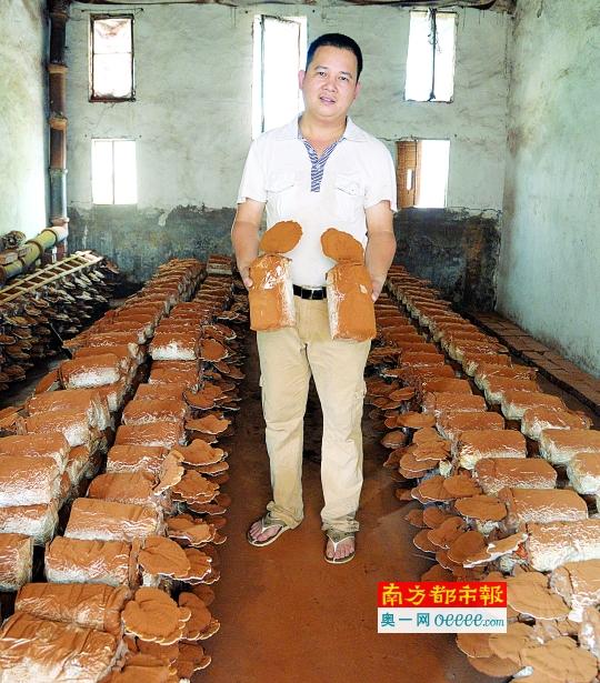 养猪场变灵芝基地年产值超百万