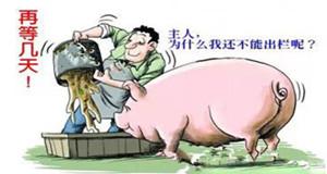 冯永辉:不要压栏养牛猪(8.8)