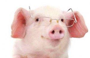 用这些中药食疗配方喂猪,增重治病,效果杠杠的!