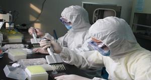 中国科学家破译环状RNA调控猪产肉性状形成分子机制