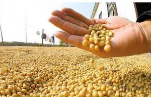 天量大豆进口之后 美国再次大幅上调大豆