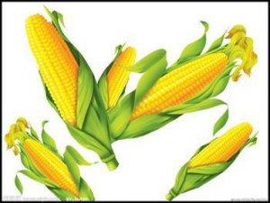 """市场有点""""乱"""" 新玉米上市前会否出现"""""""