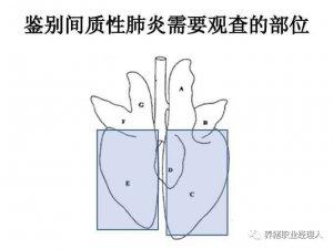 猪肺部大体病变与临床初步诊断(下)
