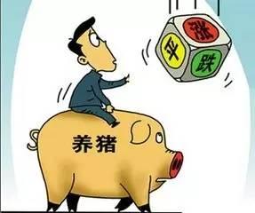 屠企手中没有多少底牌可打?8月中下旬猪价怎么走,信心很重要