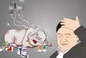 别给猪乱吃药了!猪场基础药物的应用方法!
