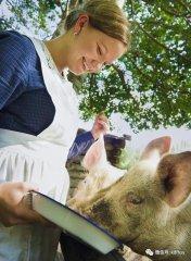 5年之后,还能养猪业的就只有这2种群体!