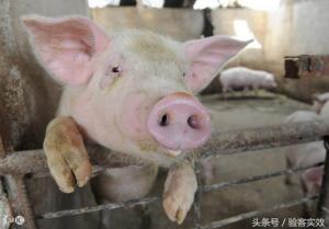 董广林:又一家猪场倒闭了,其背后的原因你绝对想不到!