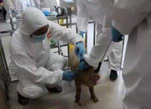 养猪疫苗这么多,你是如何保管的?