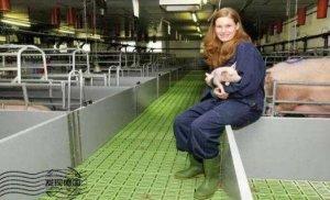 德国能成为养猪强国是不是吹的?