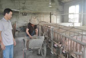 农商银行打出信贷组合拳帮一把养猪能手上规模