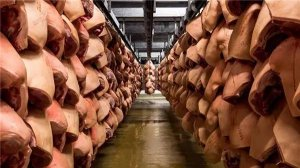 丹麦日屠宰10万头猪的「最现代化」屠宰场这么大