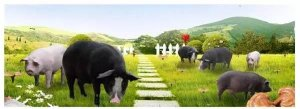 顾宪红:动物福利与养殖利润之间的平衡点如何找
