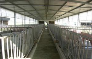 投入帮扶资金163万元建生猪养殖基地