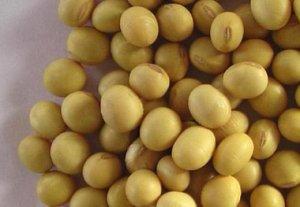中国8月进口大豆845万吨,创同期纪录高位