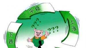 """猪价逆势反弹3个月,环保督查或改变此轮""""猪周期""""时间跨度"""