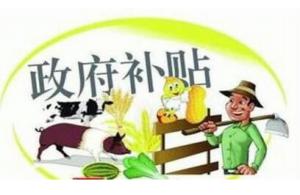 疫苗、无害化、屠宰……统统补贴,福建省猪业补贴方案发布