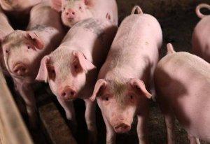 生猪市场又发变动,猪价将进入震荡调整期