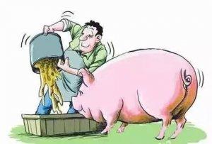 猪采食量突然下降!这15个原因,你都知道吗?