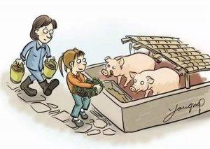 养猪中8个节省饲料的小妙招,你都知道吗