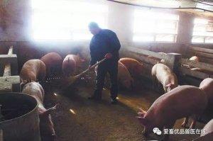 """秋季养猪,如何把握黄金时期快速育肥,给猪""""贴秋膘"""""""