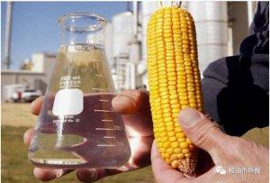 玉米后市前景利好 燃料乙醇有1000万吨增