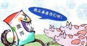 猪场都有哪些腹泻病?如何应对?