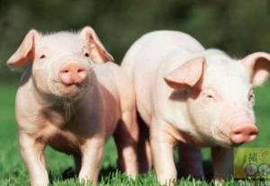 山东养猪人,环保上不了解这些可能会吃大