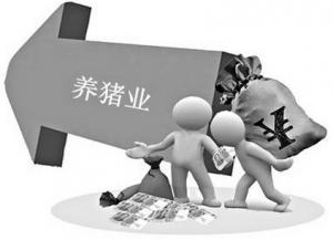 雏鹰农牧王爱彦:中国生猪市场现状及行业发展趋势