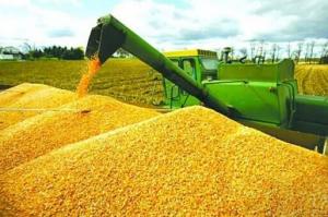 玉米迎来利好消息!单产有望创新高 开秤