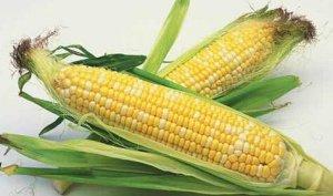 玉米翘尾终结 关注淀粉高价回调