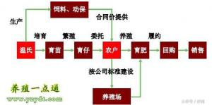 温氏股份与牧原股份养殖模式比较分析,养猪模式决定利润