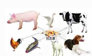 农业部答复全国政协委员关于我国养殖业抗