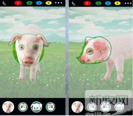 人工智能将改变养猪方式?