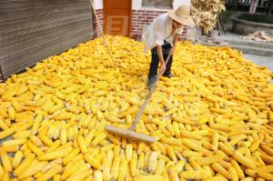 未来玉米市场多空因素判断