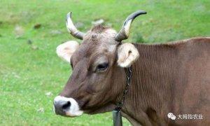 猪、牛、羊……养哪个能赚钱?