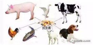 农业部:关于我国养殖业抗生素滥用情况及对策的提案