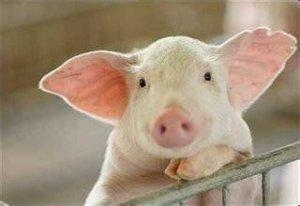 要想养好猪,还得学学她!