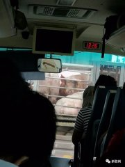 没想到,国庆堵车段子全输给了一只猪!