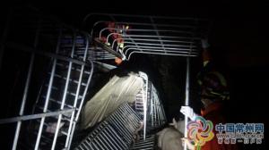 常州运猪货车侧翻,60头猪当场死亡