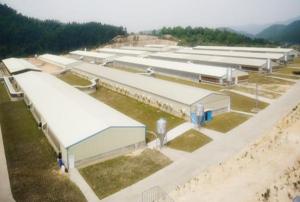 想投资建设规模化集约化轻钢结构养猪场,