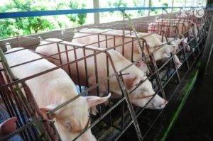 养猪人多年建设猪场经验,减少新手养猪人损失!