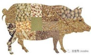 这样做,养猪成本降低不止20%-30%!料肉比2.2:1也是可以的