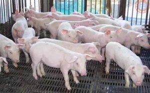震惊!养殖环保的真相就是淘汰小散养殖户